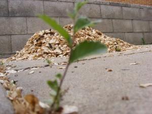 Focused on Seeds? Leads?